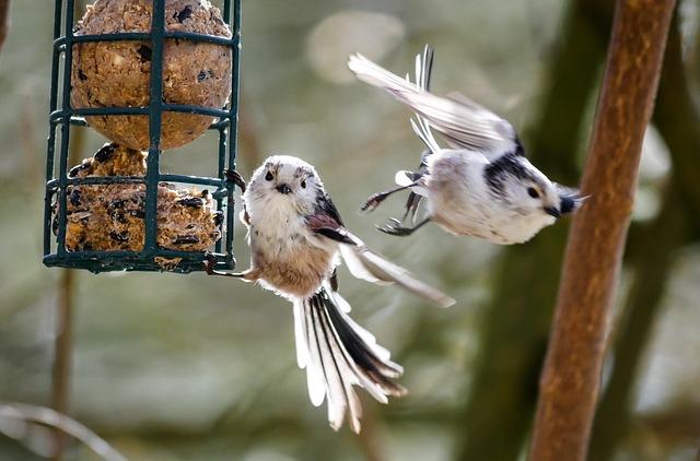 Vögel am Meisenknödelhalter