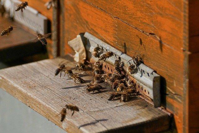 Bienenstock im Garten