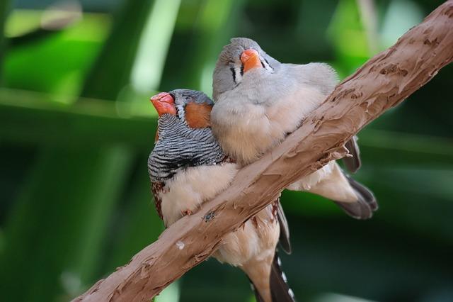 Zwei Vögel sitzen auf Baum