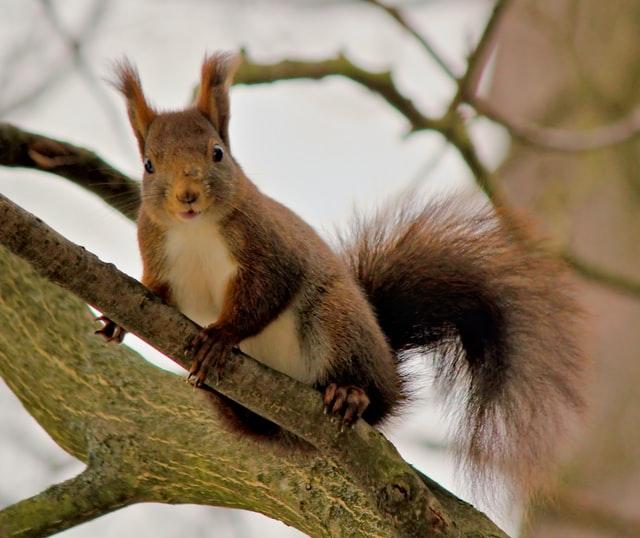 Eichhörnchen auf dem Baum 2