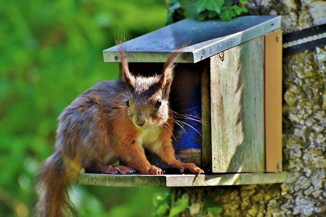 Eichhörnchen an einem Futterhaus