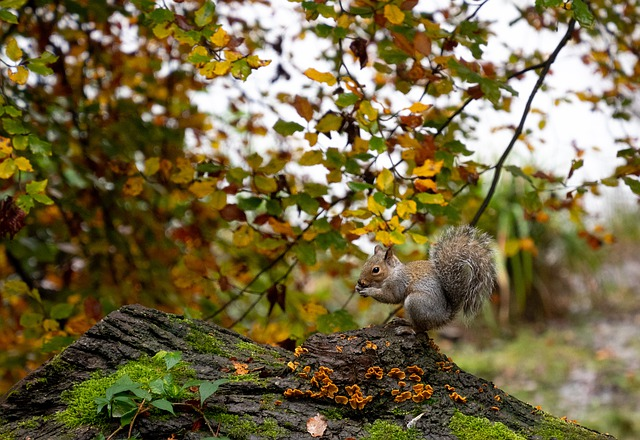 Eichhörnchen frisst Pilze