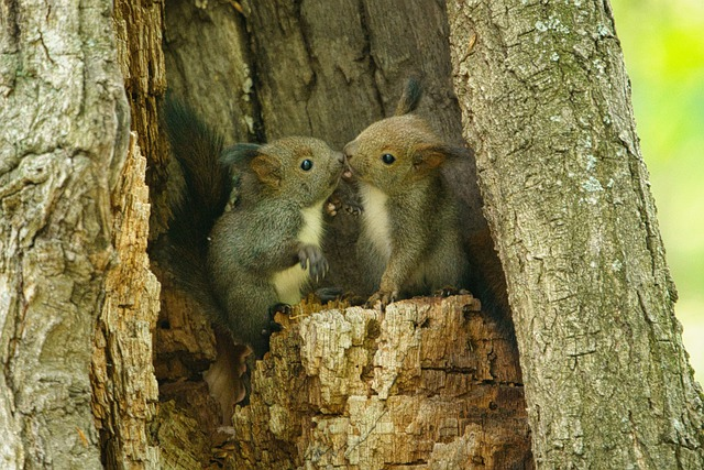 Jungtiere im Baum
