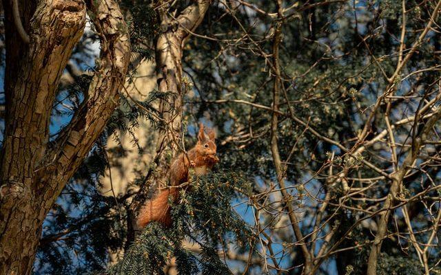 Eichhörnchen sitzt im Baum