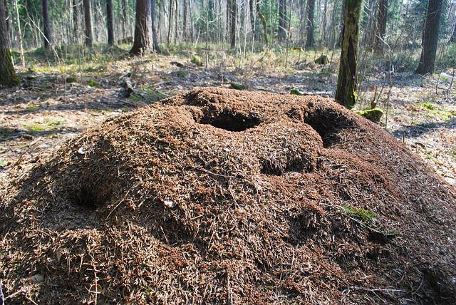 Großer Ameisenhügel