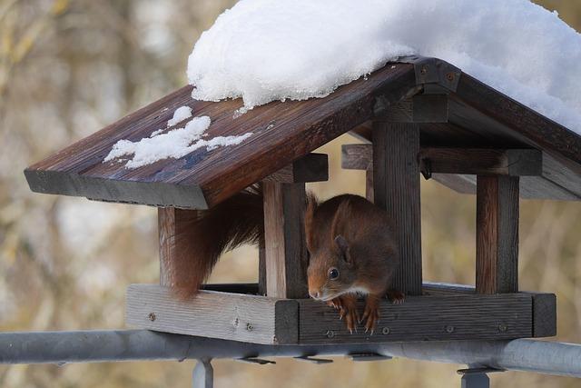 Eichhörnchen am Vogelfutterhaus