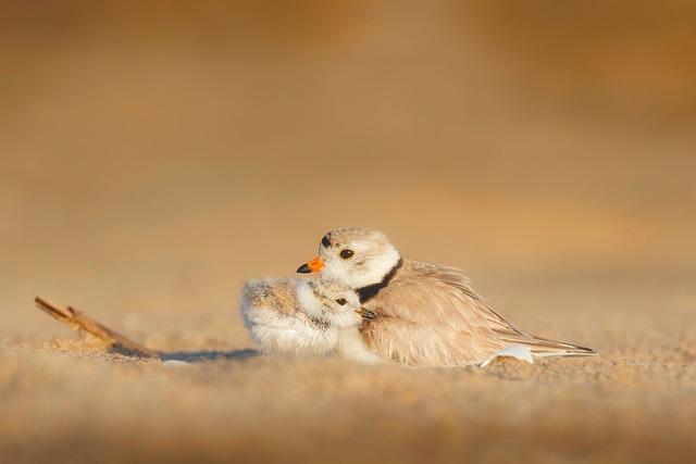 Küken mit Vogelmutter