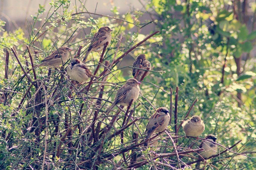 Vogelhecke