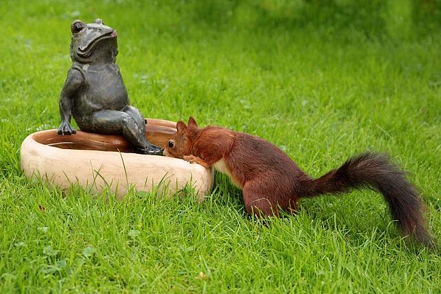 Eichhörnchen an der Wassertränke