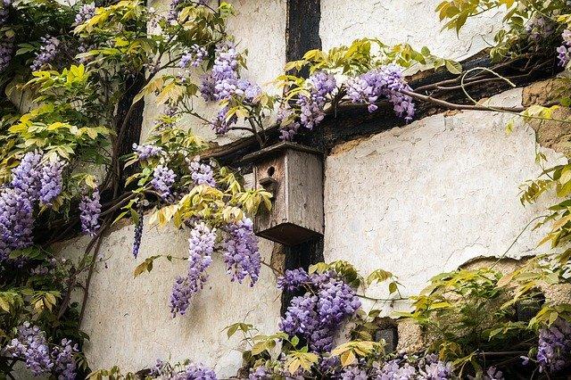 Nistkasten und Kletterpflanzen