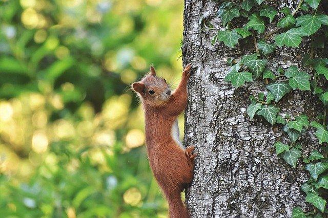Eichhörnchen an einem Baumstamm