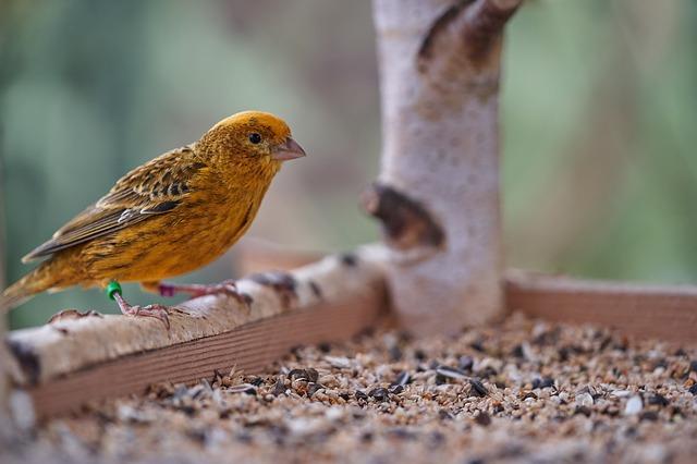 Vogel an der Futterstation