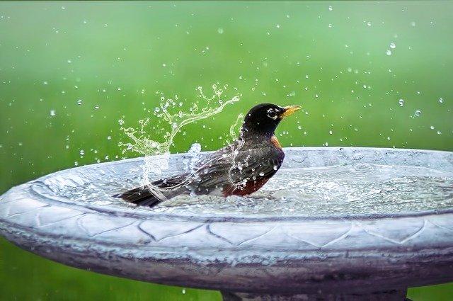 Vogel im Wasserbad