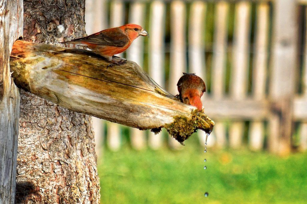 Vögel auf Baumstamm